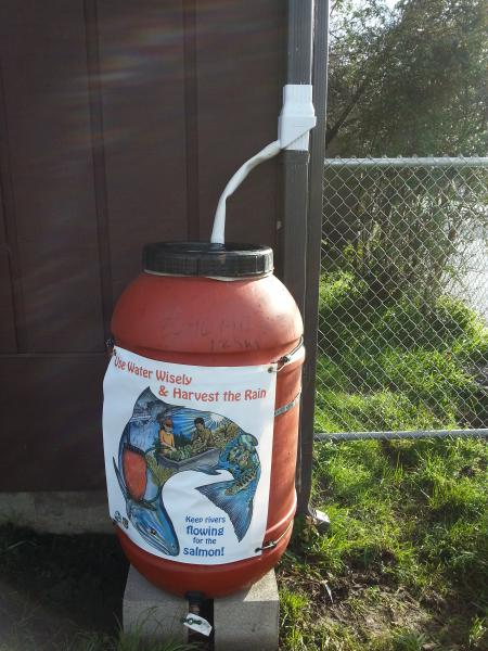 Photo of an installed rain barrel at Union Street Charter School in Arcata, CA.